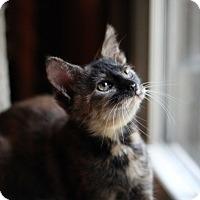 Adopt A Pet :: Mini - Richmond, VA