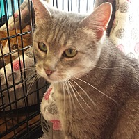 Adopt A Pet :: Nevee - St Paul, MN
