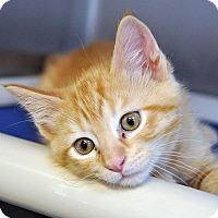 Adopt A Pet :: Carter - Fort Leavenworth, KS