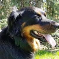 Adopt A Pet :: Sammy - Blackstock, ON
