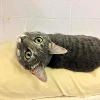Adopt A Pet :: Roz - Cumming, GA