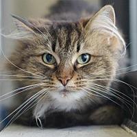 Adopt A Pet :: Tibby . - Rocky Mount, VA
