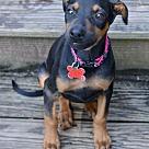 Adopt A Pet :: Little Princess
