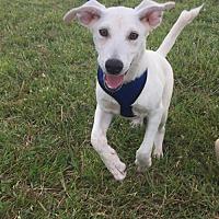 Adopt A Pet :: Milan - Pembroke, GA