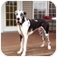 Photo 1 - Great Dane Dog for adoption in Springfield, Illinois - Liam