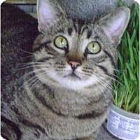 Adopt A Pet :: Charming CHARLIE - Monrovia, CA