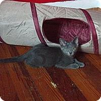 Adopt A Pet :: Treat - Chicago, IL
