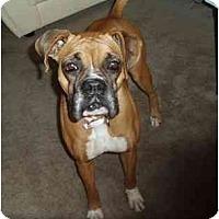 Adopt A Pet :: Caleigh - Brunswick, GA