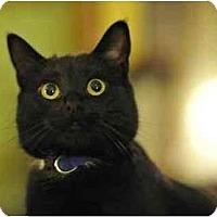 Adopt A Pet :: Belle - Portland, OR