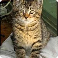 Adopt A Pet :: Leo - New York, NY