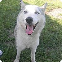 Adopt A Pet :: Sky - Jacksonville, FL