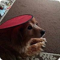 Adopt A Pet :: Foxy - Alliance, NE