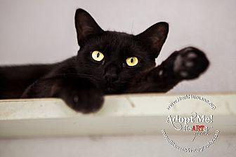 Domestic Shorthair Cat for adoption in Mohawk, New York - Gambino