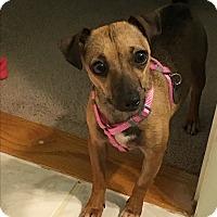 Adopt A Pet :: Kisa - Marietta, GA