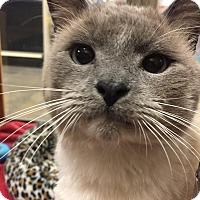 Adopt A Pet :: Harry - Woodstock, GA