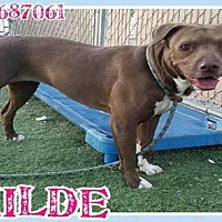 Adopt A Pet :: HILDE - Mesa, AZ