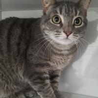 Adopt A Pet :: Lynda - Manteo, NC