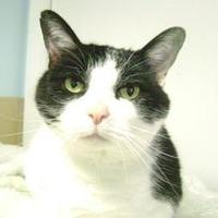 Adopt A Pet :: Ivy - Middletown, OH