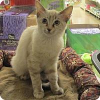 Adopt A Pet :: BONNIE - Diamond Bar, CA