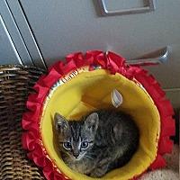 Adopt A Pet :: Pip - Tampa, FL