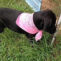 Adopt A Pet :: CARLEE - Portsmouth, NH