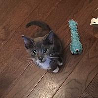 Adopt A Pet :: ZUMA - Woodstock, GA