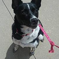 Adopt A Pet :: Sassy - Hazel Park, MI