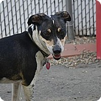Adopt A Pet :: Sparky- In CT - West Hartford, CT