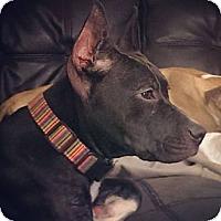 Adopt A Pet :: Zero - Orlando, FL