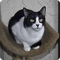 Adopt A Pet :: Skeeter - New Port Richey, FL