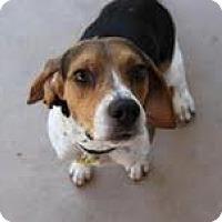 Adopt A Pet :: Chance - Phoenix, AZ