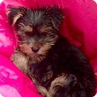Adopt A Pet :: Charlie - stella, NC