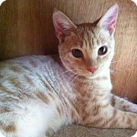 Adopt A Pet :: Scooter - St. Louis, MO