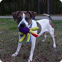Adopt A Pet :: Buster - Mocksville, NC