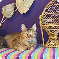 Adopt A Pet :: Tinsley - Roanoke, TX