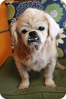 Pekingese Mix Dog for adoption in New Orleans, Louisiana - Tootie