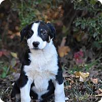 Adopt A Pet :: Rio - South Dennis, MA