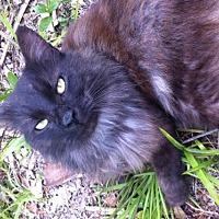 Adopt A Pet :: Gunther (WG) - Oviedo, FL