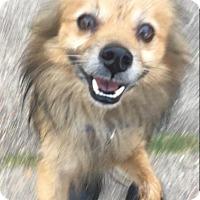 Adopt A Pet :: Brucie - Waggaman, LA