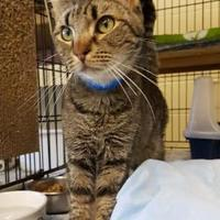 Adopt A Pet :: Seth - Erie, PA