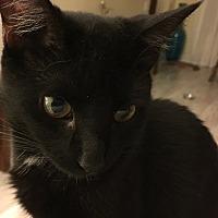 Adopt A Pet :: Pasha - Woodland Hills, CA