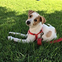 Adopt A Pet :: Polly aka Binnie - San Diego, CA