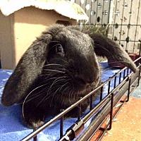 Adopt A Pet :: Zorro - Whitehall, PA