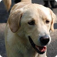 Adopt A Pet :: Dell - Foster, RI