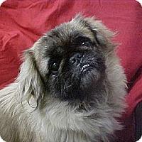 Adopt A Pet :: MISS LIBERTY - Cathedral City, CA