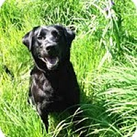 Adopt A Pet :: Macy - Lewisville, IN