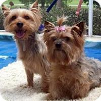 Adopt A Pet :: Mister - Tallahassee, FL