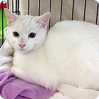 Adopt A Pet :: Joey - Vero Beach, FL