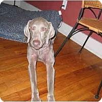 Adopt A Pet :: Weiser   **ADOPTED** - Eustis, FL