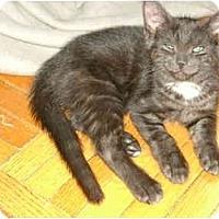 Adopt A Pet :: Baby boy - Etobicoke, ON